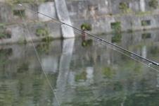 マス釣実習レポ!後編~たくさんニジマスが釣れた後は・・・アジシオが必須ですね!